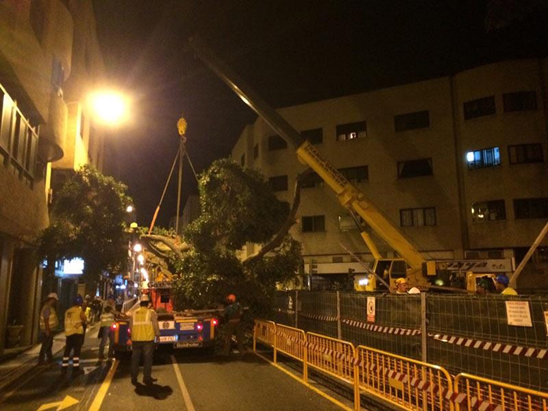 Sondertransporte Bäumen - Transportes Sánchez